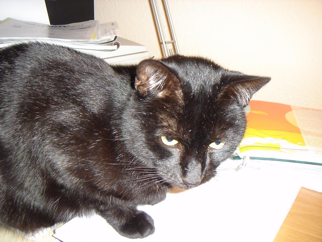 Bürofitness, Büro-Jogging, von Katzen lernen